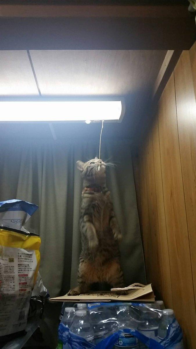 お前が犯人かよww納戸の電気がついたり消えたりする怪奇現象の犯人は猫ww