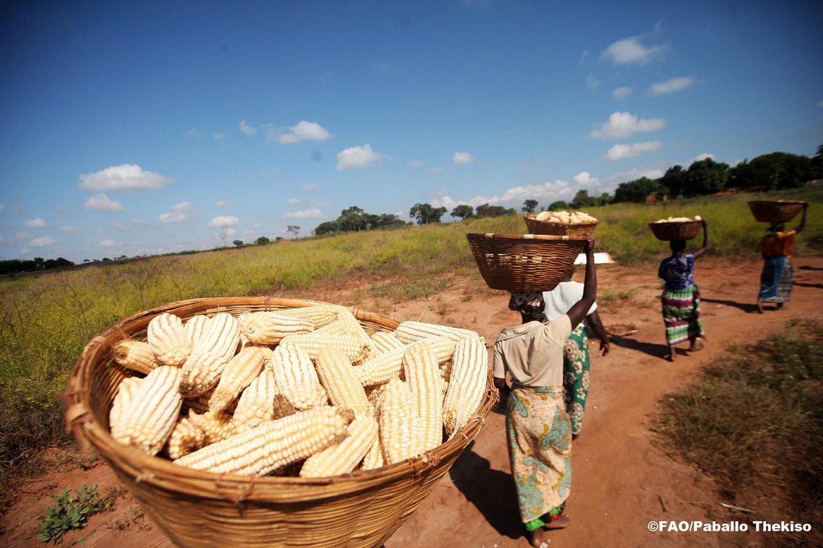 Глобальная продовольственная проблема картинки