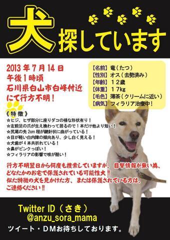 #迷い犬 【石川県、福井県の保護団体、飼い主さんへ】5年前白山で行方不明になりましたが、今も手掛かりがありません。この5年で保護された方、この犬に見覚えないでしょうか? #福井県 #石川県 #チームたつ https://t.co/3mwJfeU7cs