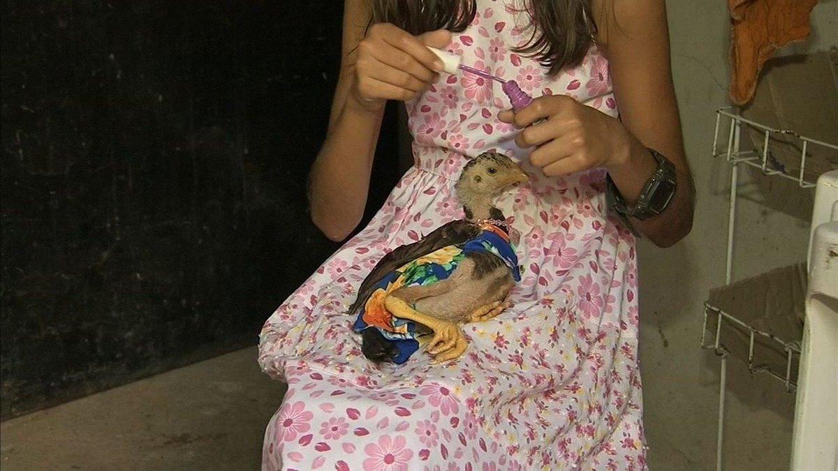 Galinha 'Simone' usa vestido e tem unhas pintadas por menina cearense apaixonada por bichos https://t.co/MWQmWc2Ohs #G1