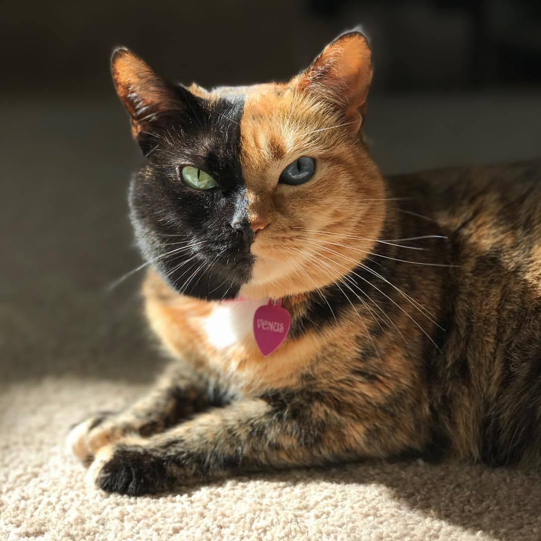 машины необычные коты мира фото и описание разберём, что невозможно
