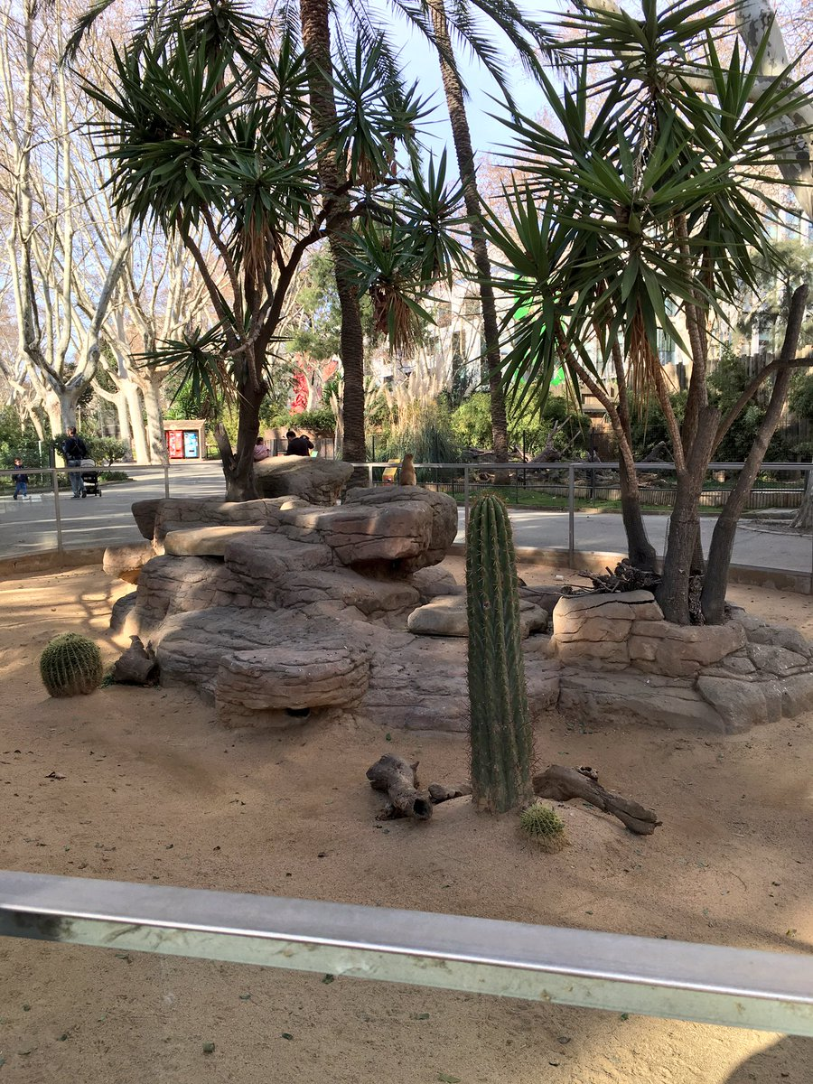 バルセロナ動物園 hashtag on Tw...