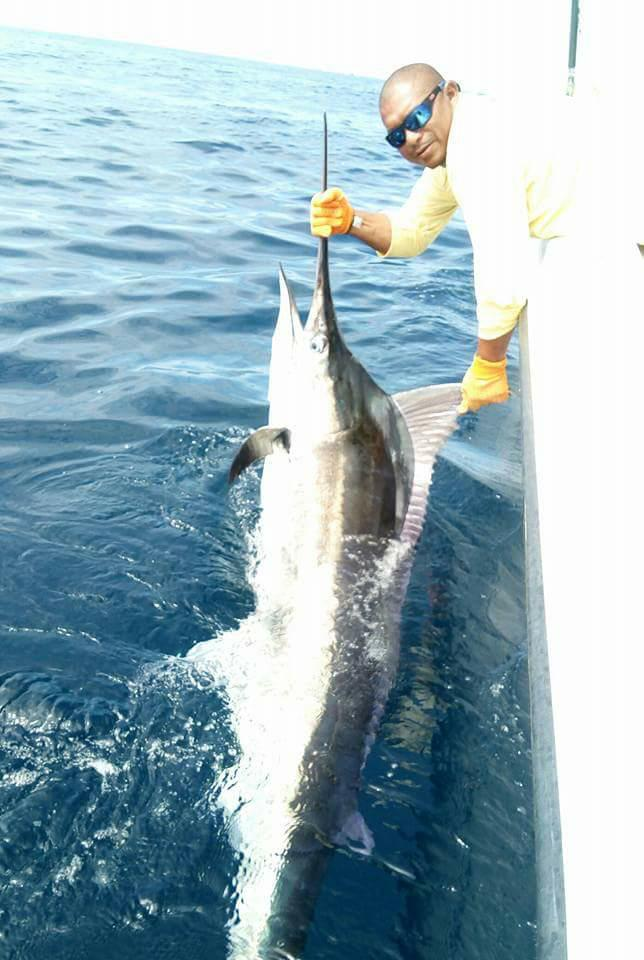 Isla Montousa, Panama - Capt. Chicho on Pescador released a Blue Marlin (300).