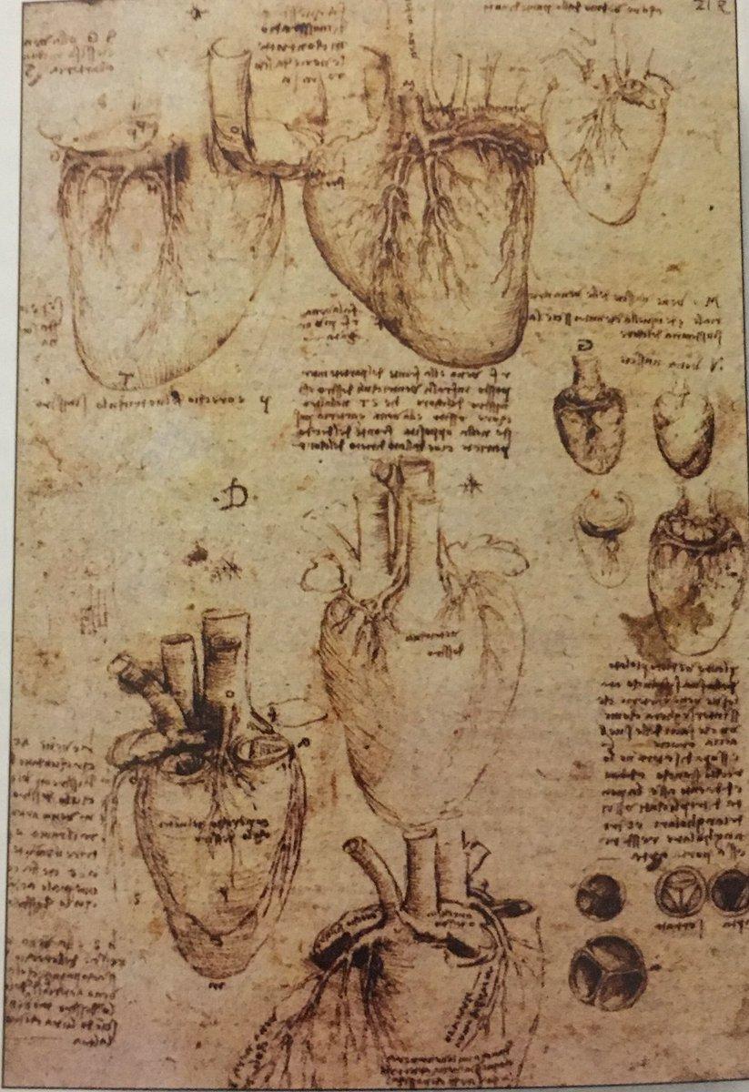 Contemporáneo Anatomía Del Hombre Da Vinci Componente - Anatomía de ...