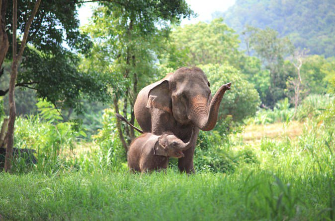 Elephant's Friend Day: Full-Day Elephant Experience at Baanchang Elephant Park in Chiang Mai  Read more about us on our Website: https://www.tickitbookit.com/activity/Chiang-Mai/Day-Trips/Elephants-Friend-Day-Full-Day-Elephant-Experience-at-Baanchang-Elephant-Park-in-Chiang-Mai/44495-2…  #PrivateTours #CityTours #Thingstodo #Activities #Tours #ChiangMai #Thailand #BaanchangElephantPark pic.twitter.com/cifG1exk8Q