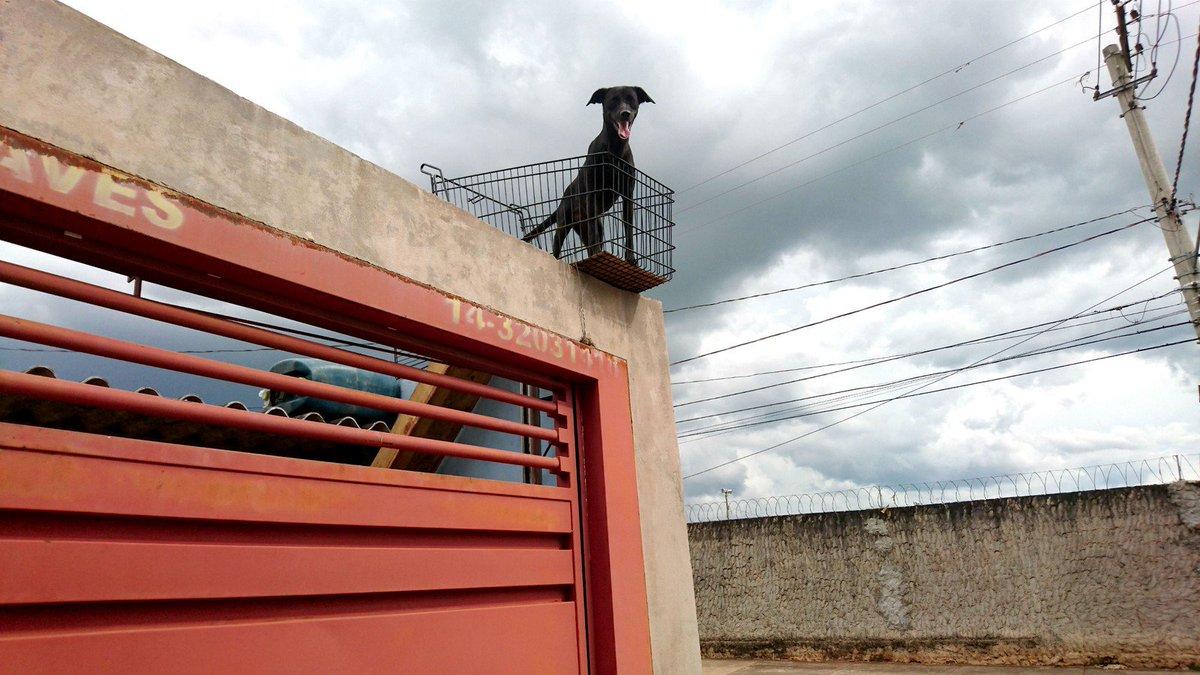 Cachorra ganha 'sacada panorâmica' e vira atração https://t.co/sRbgwqPbod #G1