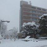 【昭島市役所周辺の積雪状況①】午後4時30分現在の市役所周辺の写真です。かなり積雪しております。これから、昭島に帰ってくる方、外出する方は足もとにじゅうぶんご注意ください。