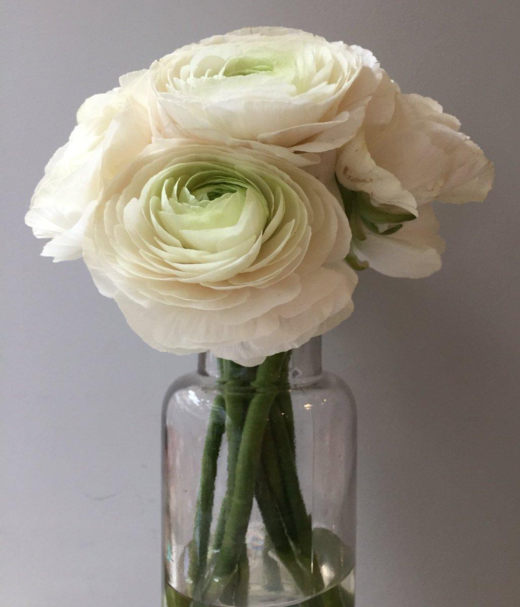 Flowerbx On Twitter Ballet Slippers Ranunculus Thats All