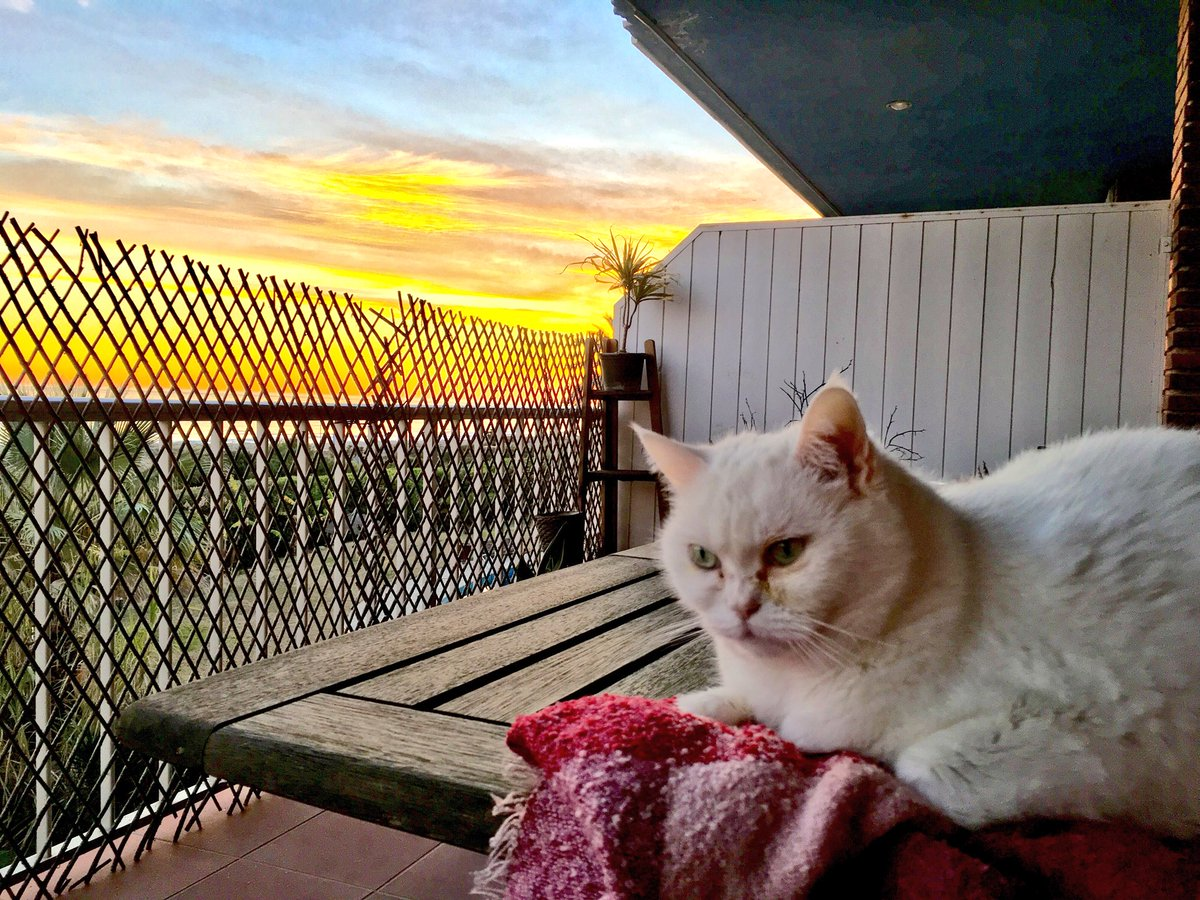 The sky is a canvas and Minchetilla -the cat- is my bloom