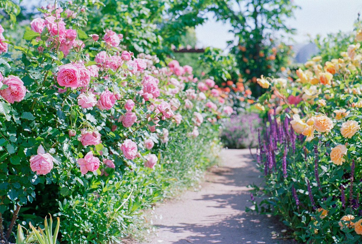 "English Garden Flowers Raleigh Nc: World Love Flowers On Twitter: ""🌸 #LoveFlowers 🌺 English"