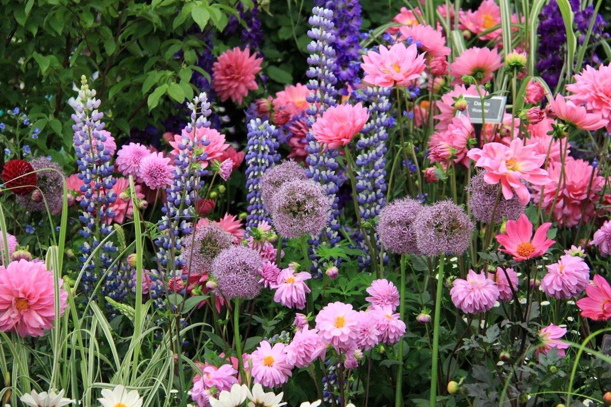 1100 am 22 jan 2018 - English Garden Flowers