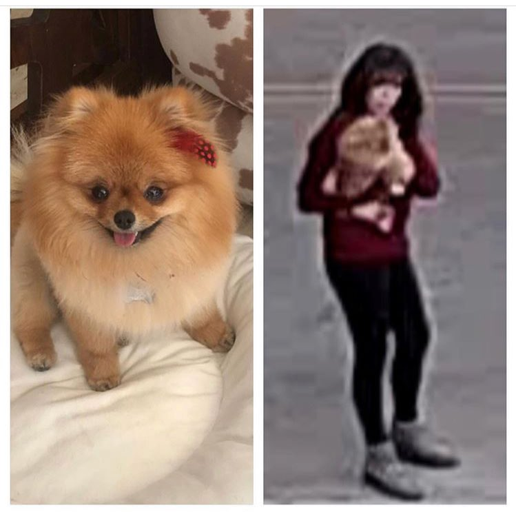 Please help us find my friend https://t.co/rNnQKB2SmW dog that was stolen right out of her own driveway! If anyone has any information on this woman please let us know immediately! $10,000 Reward, no questions asked. They just want their baby back🙏 #HelpFindChooChoo 🐕