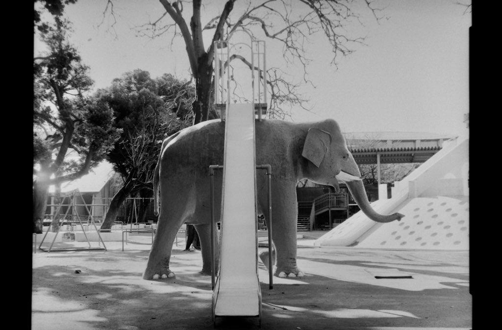 雪の日の写真は露出間違えて真っ白になってしまったのだけど、初めて4×5の現像成功しました。ほっとした… 象さんすべり台。 #intrepidcamera #fujinon1:56:180 #fomapan100