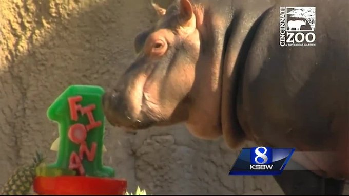 Animal Stories with Dan Green: happy birthday fiona