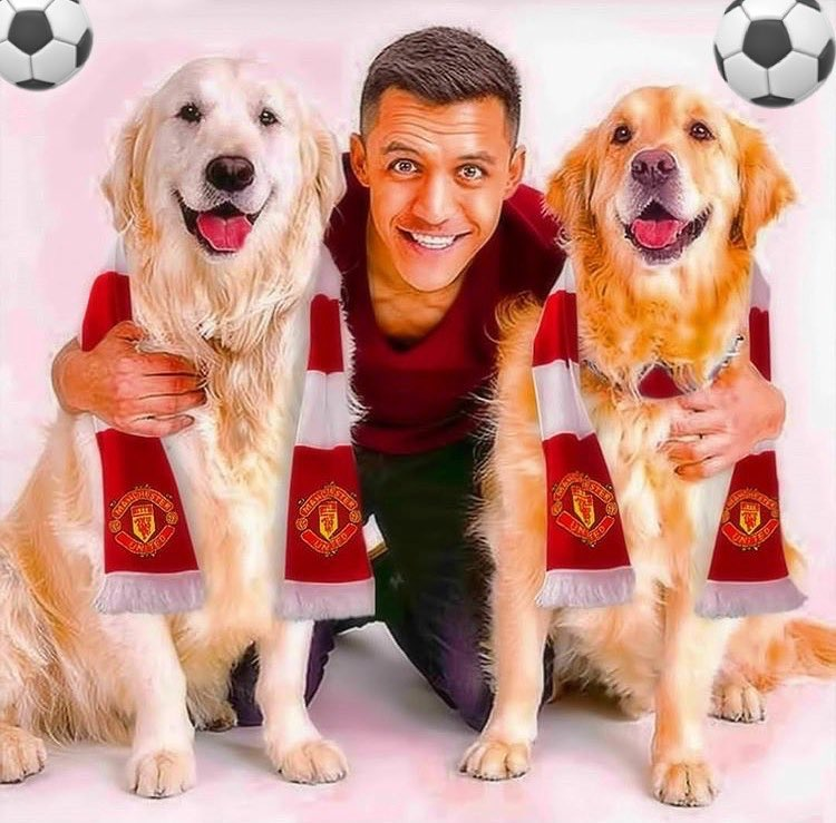 Losing Alexis Sanchez to Manchester United is bad enough for Arsenal fans, but this photo of his beloved dogs wearing Man U scarves is too much for them to handle https://t.co/eVHUtBlVqW