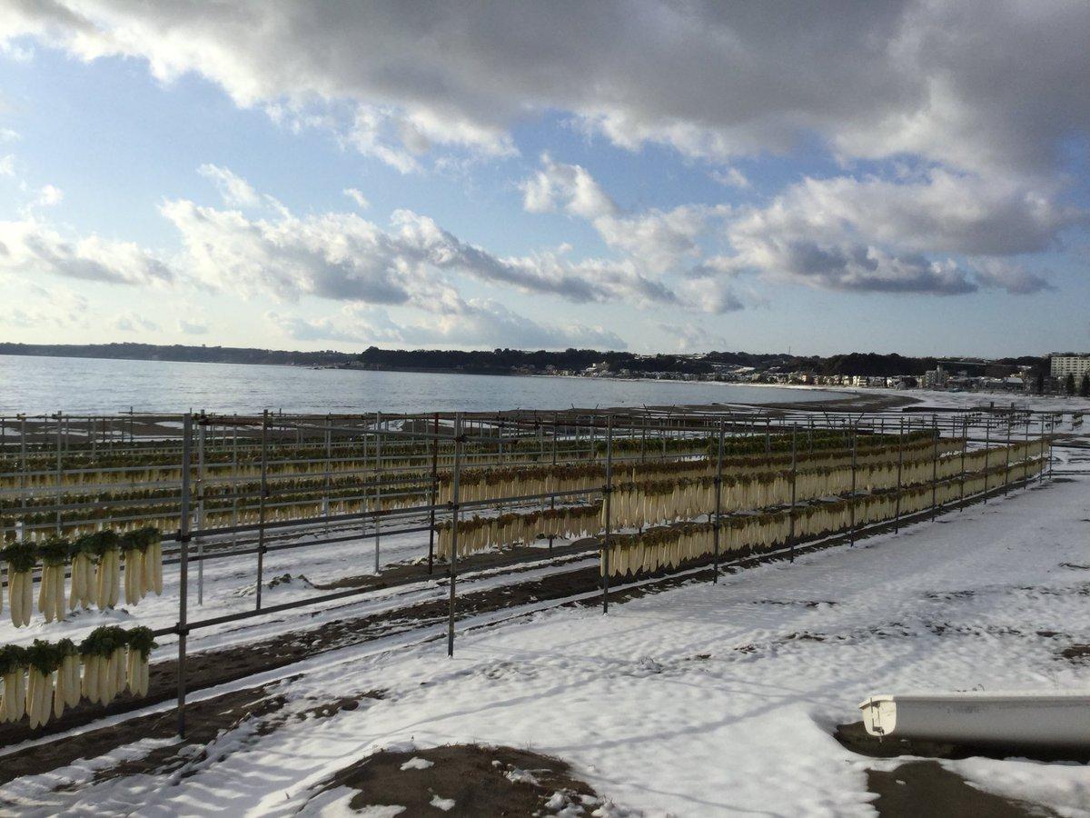 RT @miurasanpo: #三浦半島 #miurapeninsura #三浦海岸 #津久井浜 #冬の風物詩 #大根 #空 #雲 #砂浜 #海 #雪 #雪景色 #雪化粧   雪大根 https://t.co/Ov8r2xrHaU