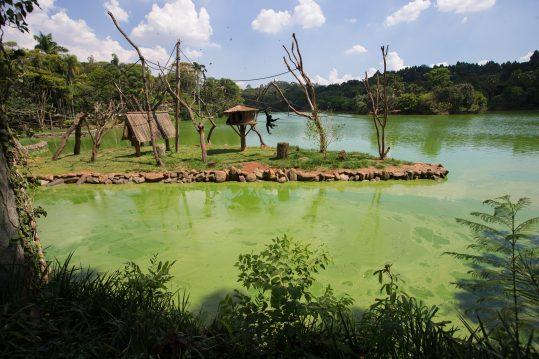 Zoológico, Zoo Safári e Jardim Botânico são fechados em SP após macaco ser achado morto https://t.co/WnmydVhHCJ