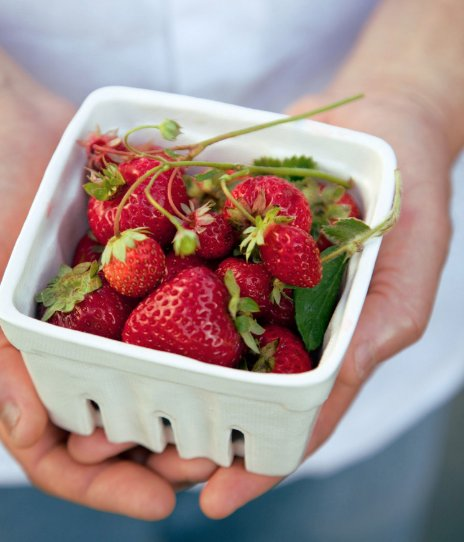 How to Grow Your Own Strawberries: https://t.co/JHDkhOE28h