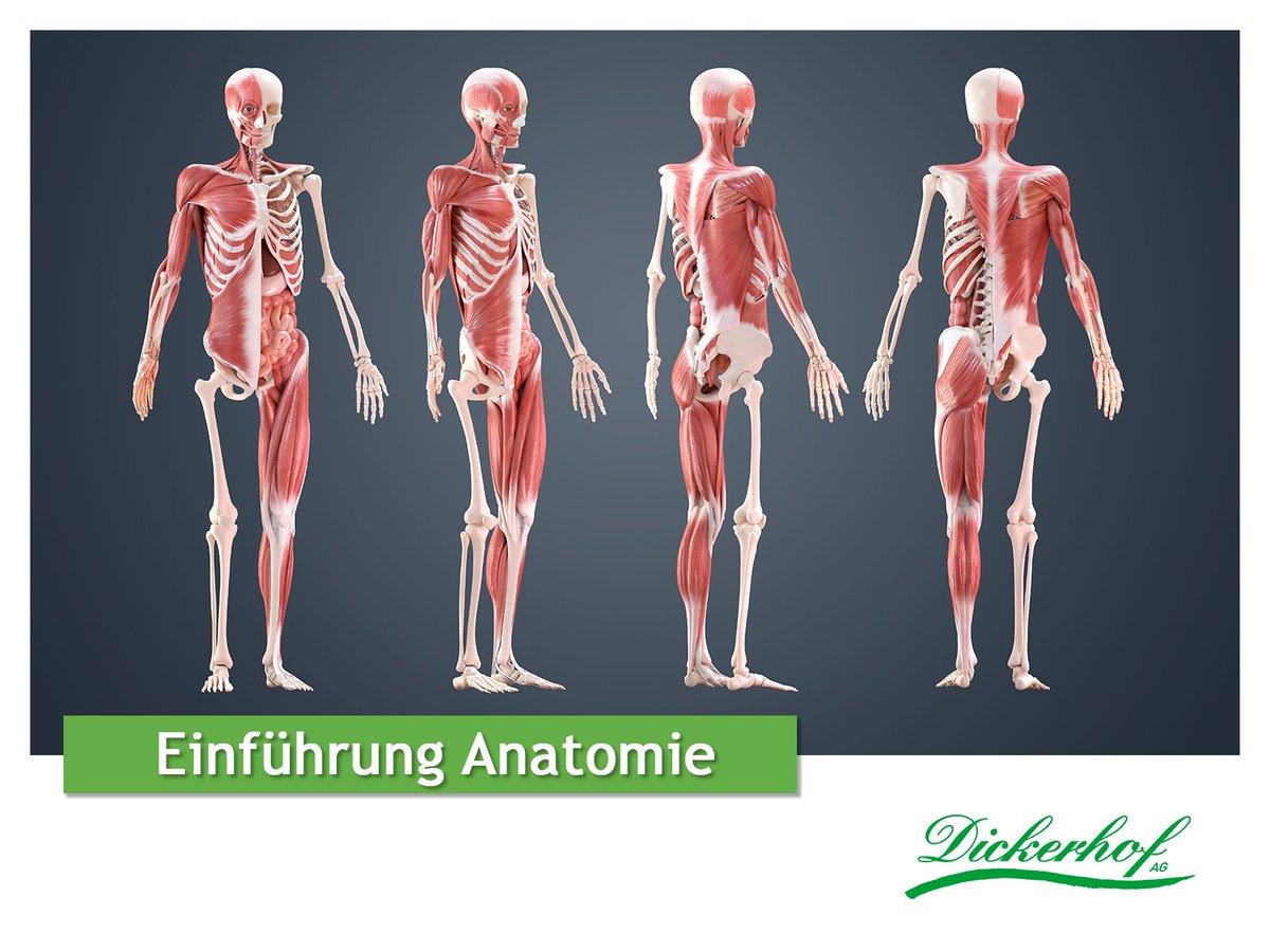 Gemütlich Triggerpunkt Anatomie Zeitgenössisch - Menschliche ...