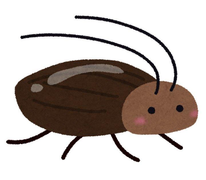 【昨日の人気記事】ゴキブリの成長を阻害する遺伝子が発見 他の生物に影響なくヤツだけを倒せる新型殺虫剤の開発に期待 https://t.co/h9S48pDsWc