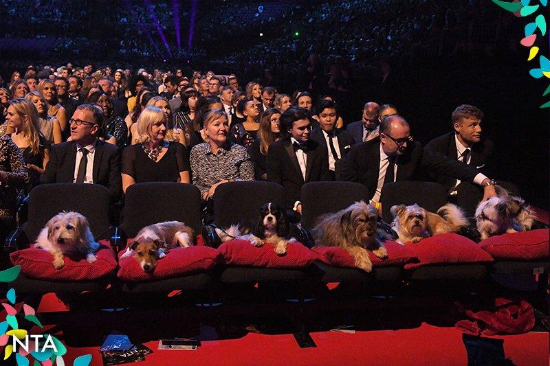 Dogs in the front row #NTAs #NTAs2018 #BatterseaDogsAndCatsHome