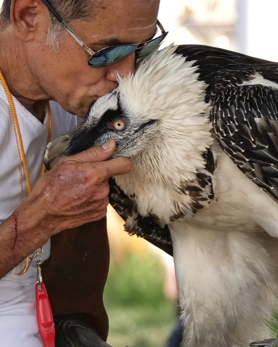Kiss And Pet The Bird Https At Pissedeagle Cawwws Tweet