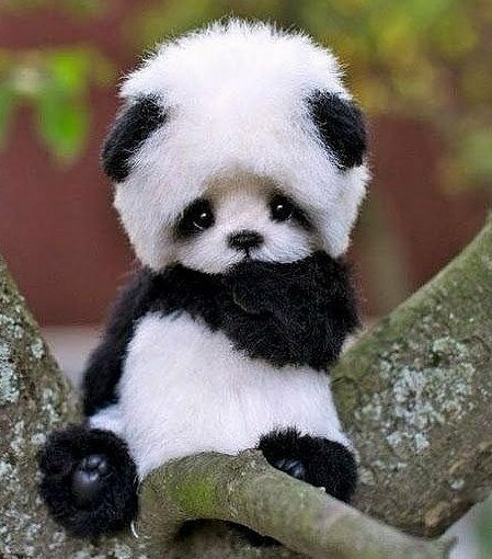 Gody On Twitter Quot Omg The Most Beautiful Baby Panda In