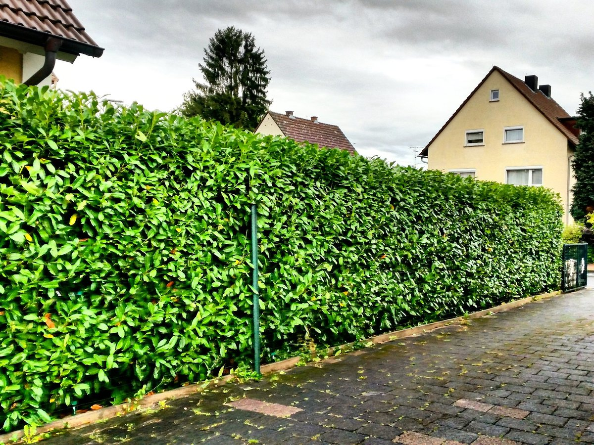 Gartenpflege Frankfurt superiltis on gärtner frankfurt badhomburg