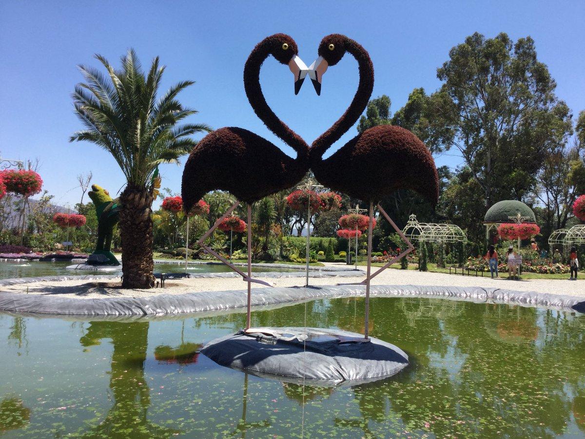 Turismo atlixco on twitter algo de lo que puedes hacer for El jardin magico