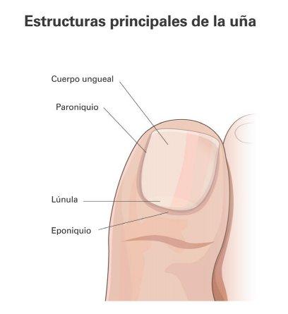 Podología Llorens on Twitter: \