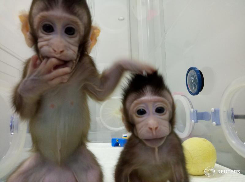 The most popular videos of 2018: Meet Zhong Zhong and Hua Hua, the first non-human primates to be cloned
