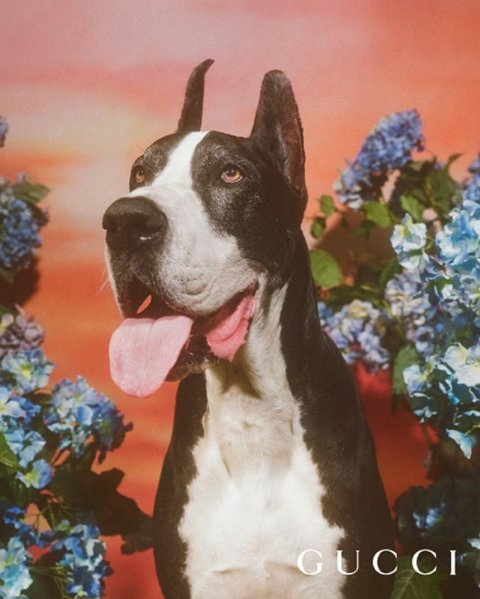 d22fe97fe Here s  petracollins shooting  gucci capsule collection celebrating the year  of the dog  ...