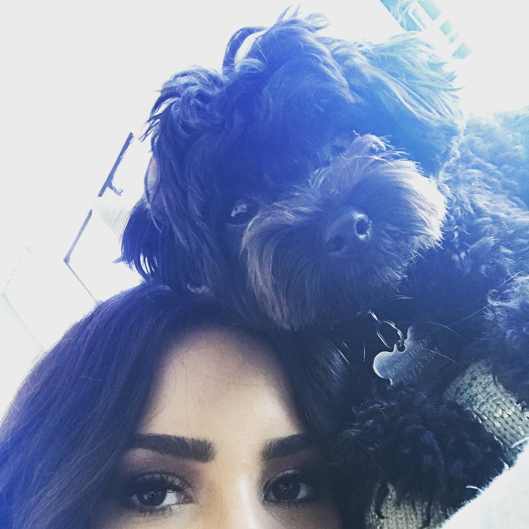 Pssst, have you been voting for @ddlovato's lil bb #Batman for #CutestPet? Just look at that FACE 🐶  #iHeartAwards