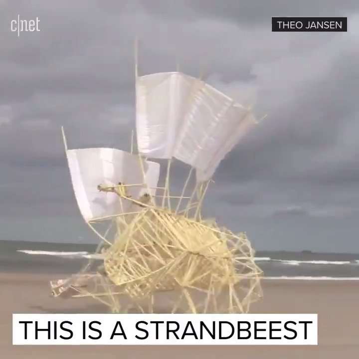 ��  This is definitely cooler than any real crabs on the beach �� https://t.co/FyDfUoVGXi
