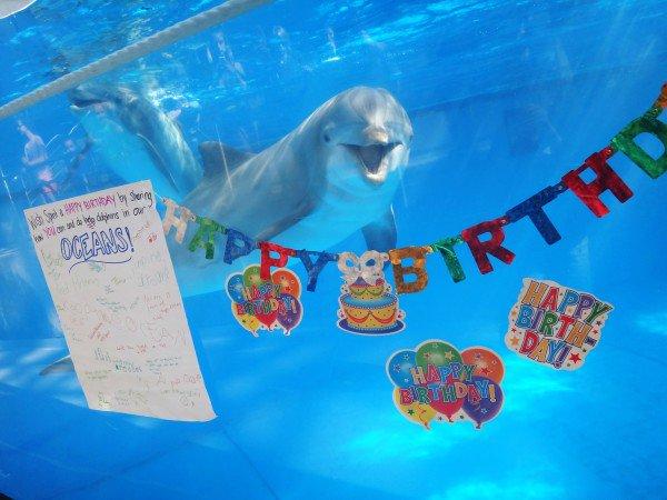 Открытка с дельфином днем рождения