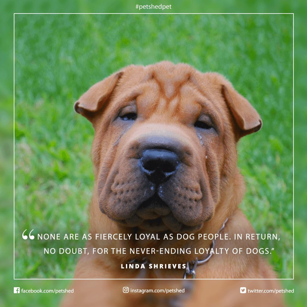 None Are As Fiercely Loyal Dog People In Return No Doubt For The Never Ending Loyalty Of Dogs