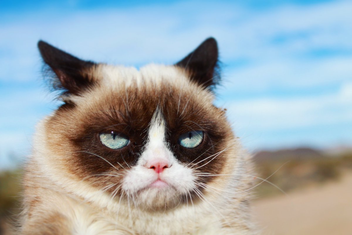 Grumpy Cat (@RealGrumpyCat) on Twitter photo 2018-01-26 17:52:58