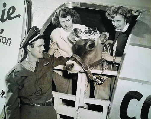 "Weird History on Twitter: ""In 1930, Elm Farm Ollie became the first cow to fly in an airplane. During her flight, they parachuted cartons of her milk for publicity.… https://t.co/r0SzK68D7J"""