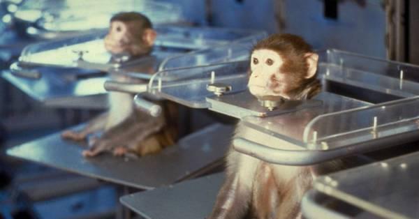 Scandalo Scimmie torturate, Volkswagen: metodo scientifico sbagliato