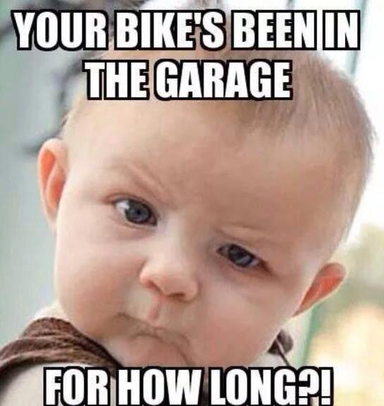 Best Riding/Trike Memes - Let's see 'em! - Page 30