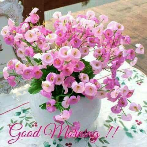 Rani GilL On Twitter Manisingh2010 GOODMORNING HAPPYMONDAY KEEP SMILING THANKS FOR UR WISHES NICE FLOWERS AND ALL RTS GUD SHAYARI TAY BLESSED