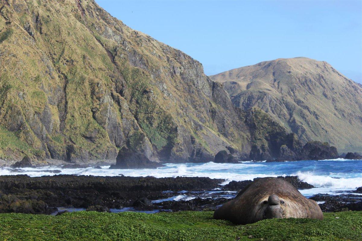 Wildlifemacquarie Island