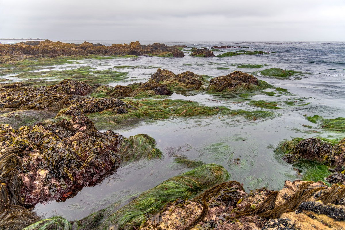Photo Of The Rocky Intertidal Zone In Monterey Bay