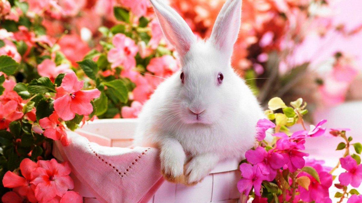 Cute Rabbit Wallpaper HD ...