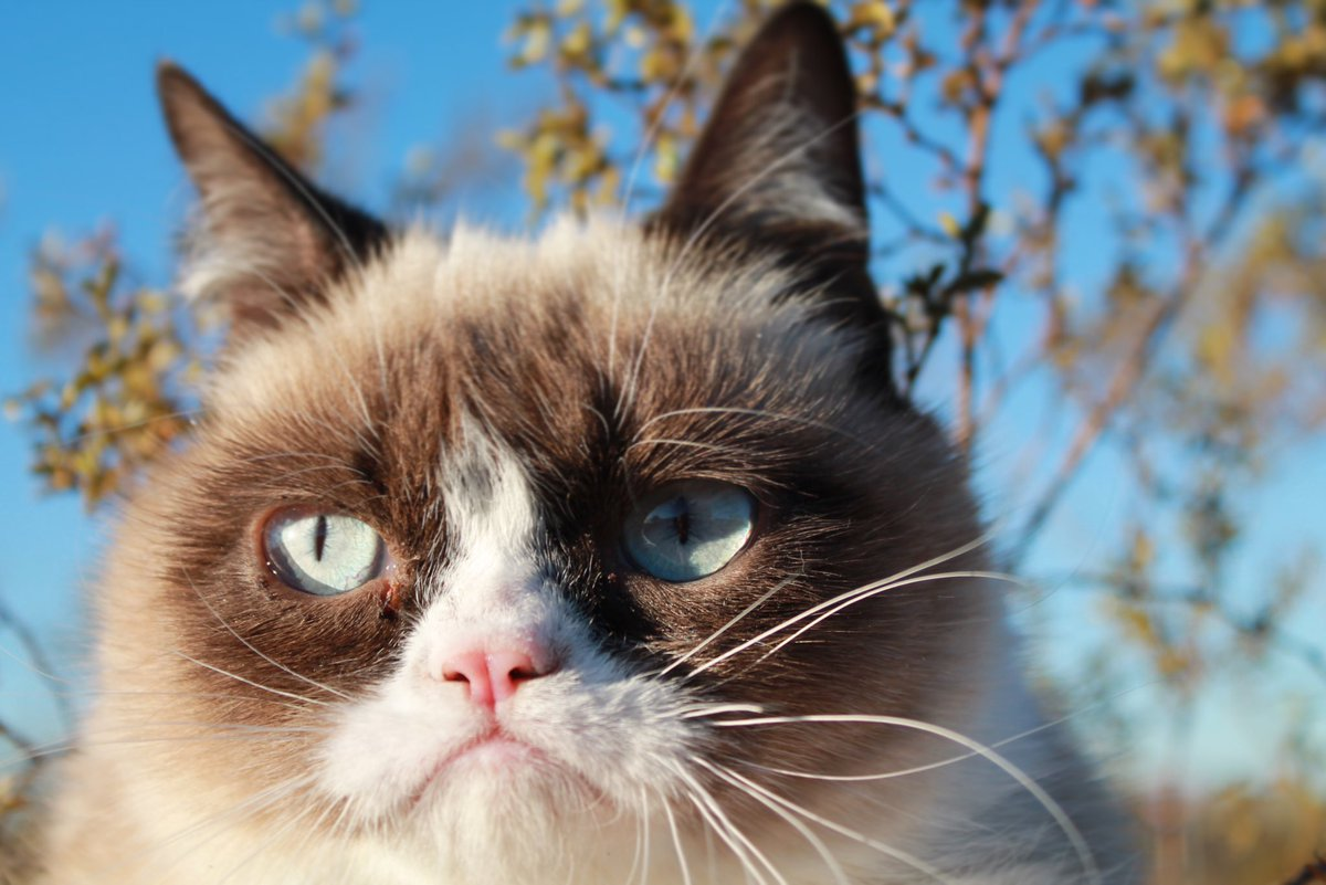 Grumpy Cat (@RealGrumpyCat) on Twitter photo 2018-01-29 21:50:55