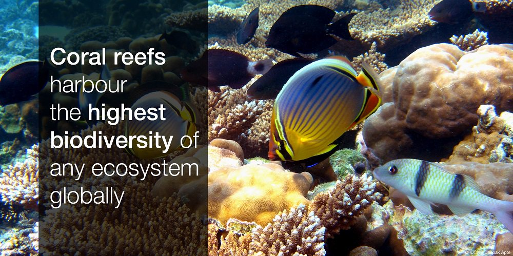 an overview of the ecosystem of the coral reefs Coral reefs are the ocean's most diverse and complex ecosystems, supporting 25% of all marine life, including 800 species of reef-building corals and more than one million animal and plant species.