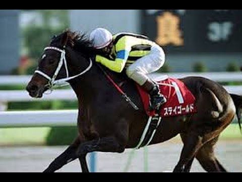 「一度穴をあけた馬は、また同じような条件で穴をあける。」  ステイゴールド 春天 10人気2着 秋天 12人気2着 有馬記念 11人気3着 宝塚記念 9人気2着 走っても走っても人気にならない本当にありがたい馬だったなぁ。