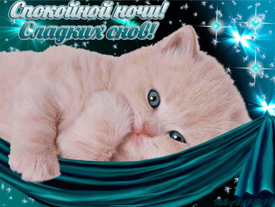 Добрый вечер и спокойной ночи картинки с котятами