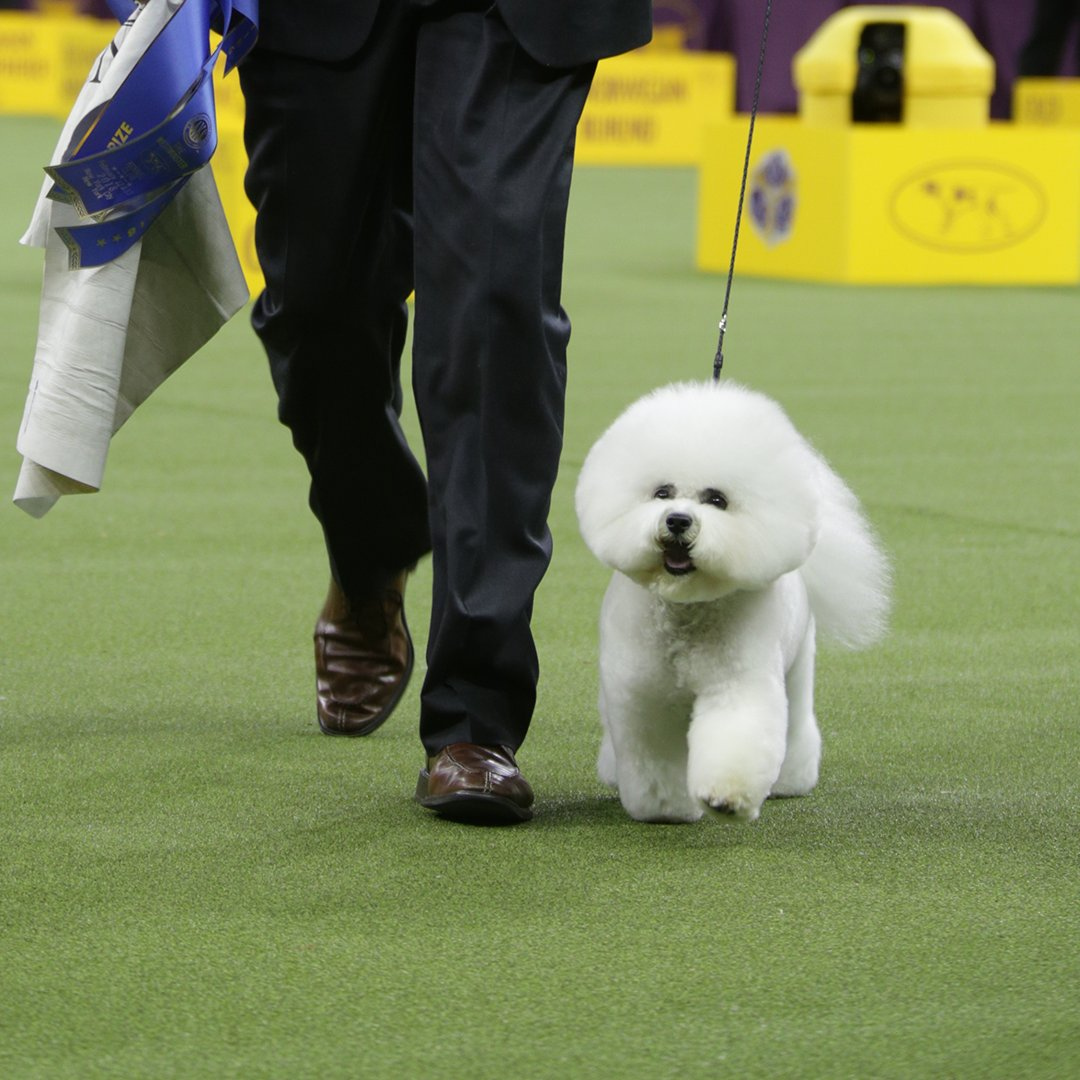 Westminster Dog Show On Twitter The 142nd Wkcdogshow Best In Show