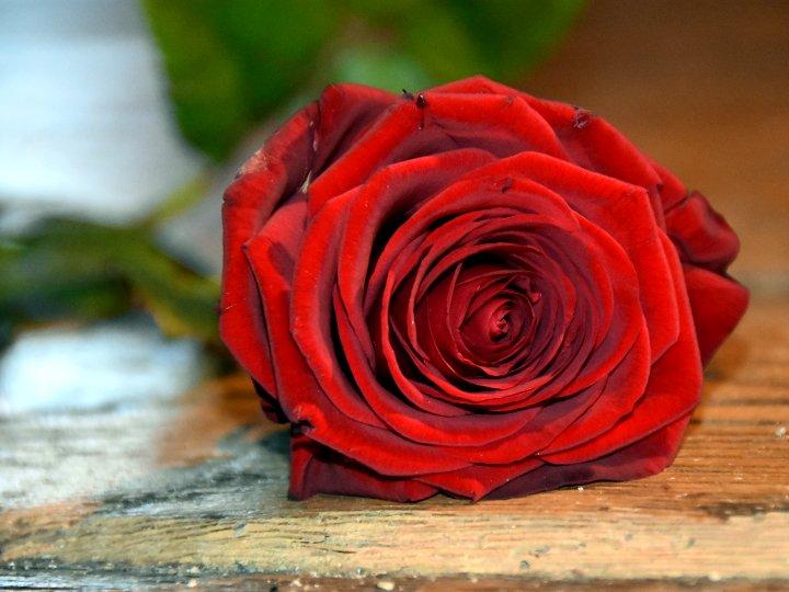 Wir wunschen allen einen schonen valentinstag